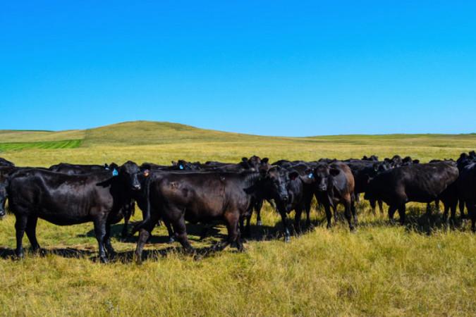Фермерское хозяйство: производитель или инструмент в руках агрохолдингов?