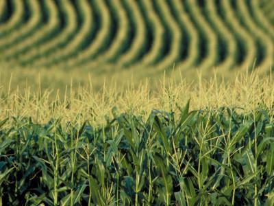 Земельный банк агрокомпаний: юридические риски и неопределенности